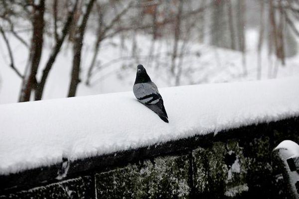 Чернігівщина, сніг, дощ