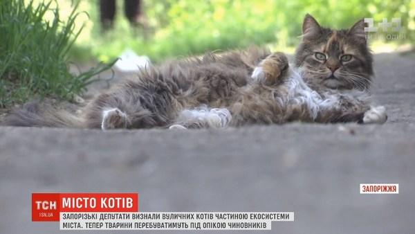 коти, депутати, Запоріжжя, охорона