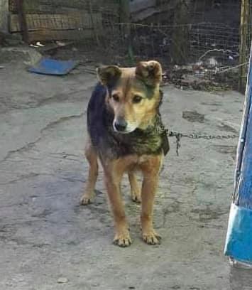 пес, старість, волонтери, їжа, прихисток