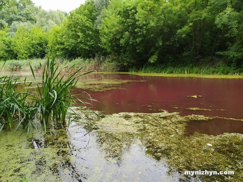 Графський парк, рожева вода