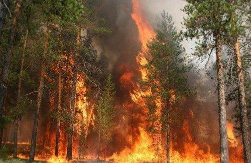 проблема, лісові пожежі, сухі грози