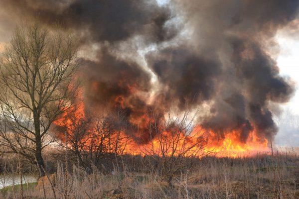 пожежа, трава, дерево