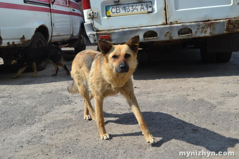 безпритульні тварини, фото, Ніжин