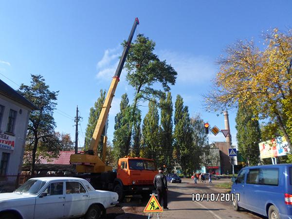 Дерева, КП ВУКГ, валка дерев