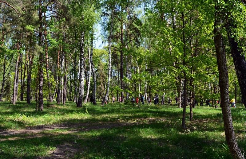 Беремицьке, парк, екологія