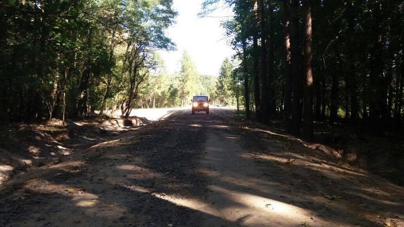 Лісове господарство, ліс, дорога в лісі