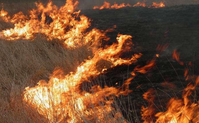 Спалювання трави, штраф, відповідальність