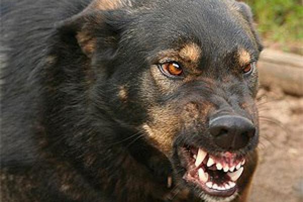 собаки, укуси, вакцина