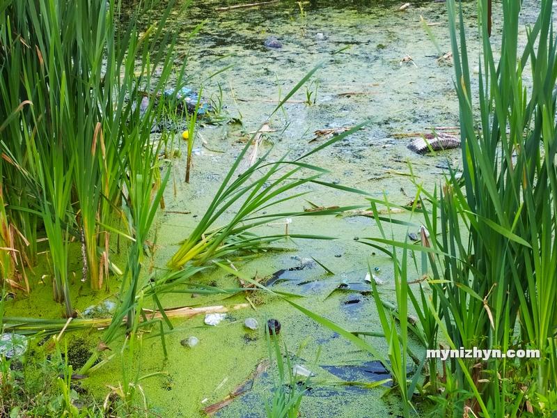 Ніжин, водойми