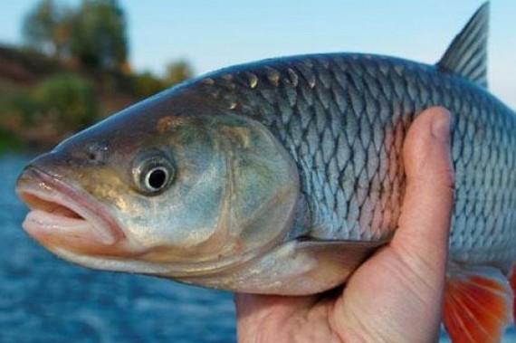 риболовля, нерест, заборона