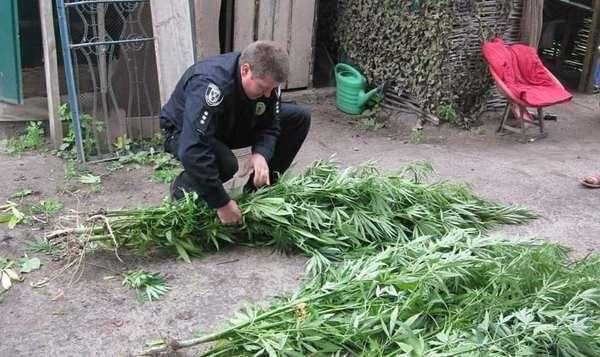 поліція, наркотики, плантація