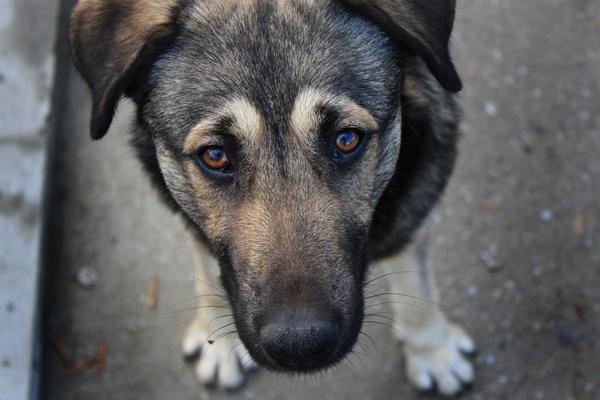собака, отруєння, ринок