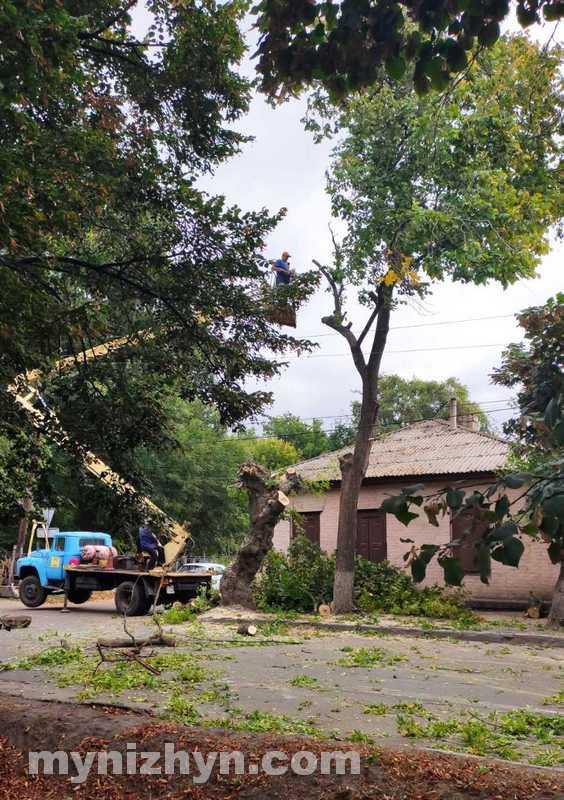 аварійне дерево, УЖКГ та Б, видалення