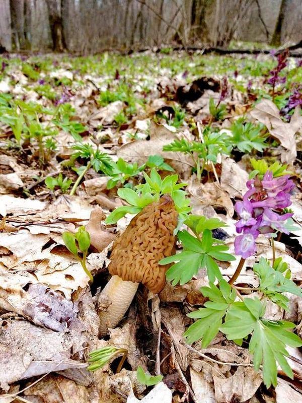 Ніжин, Чернігівщина, гриби