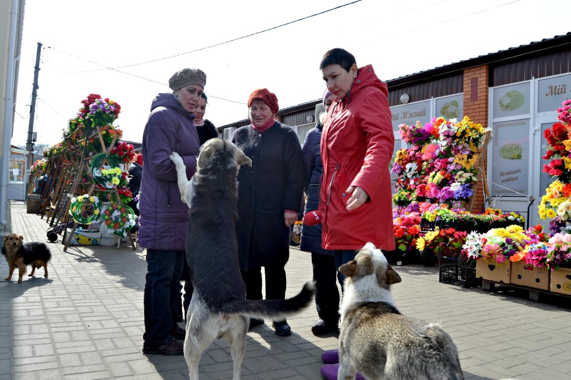 1+1, сюжет, безпритульні собаки, отруєння, ринок