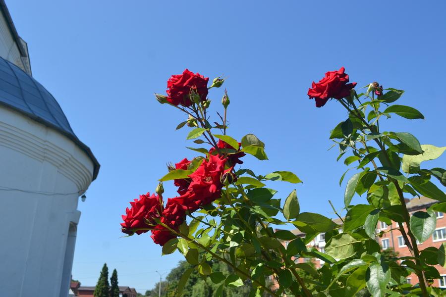 райський сад, Покровський храм