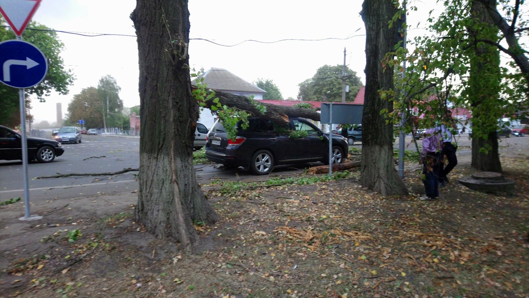 буревій, дерево, Сімьмаш, авто