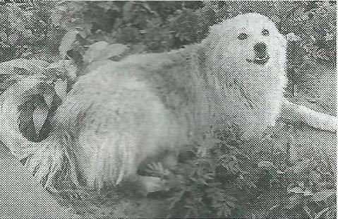 безхатні собаки, тварини, зоозахисники