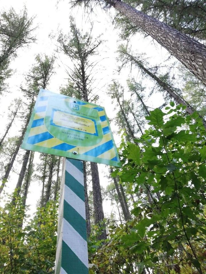 модрини, Ніжинський лісгосп