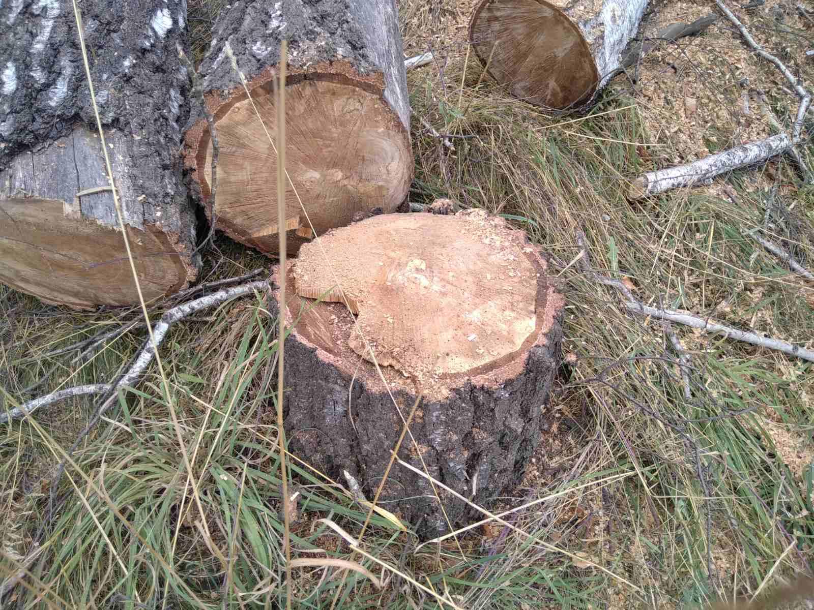 дерева, видалення, КП