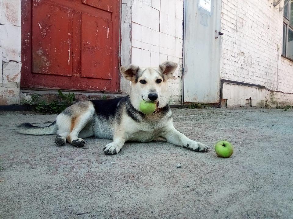 """АТ""""Чернігівгаз"""", собака, яблука"""