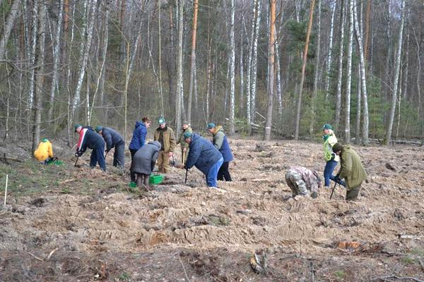 Міжнародний день лісу, Ніжинське лісове господарство