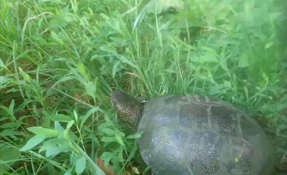 черепахи, водойми