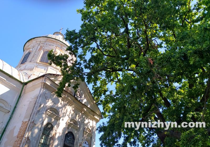 церква Іоанна Богослова, дуб, гілки