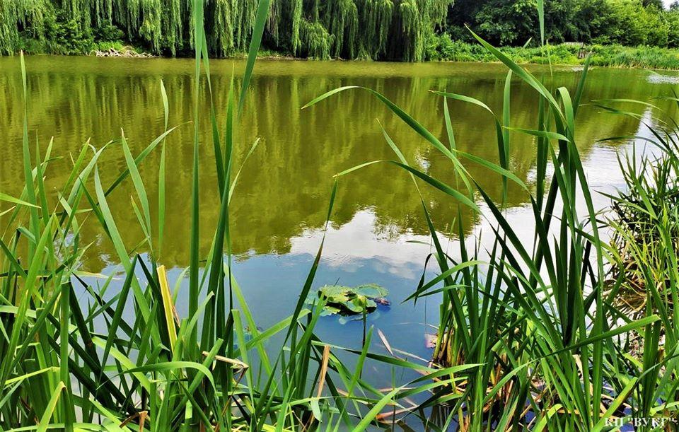 водяні лілії, висадка, Графський парк