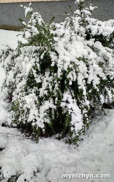 погода, пожежі, суха трава, сніг