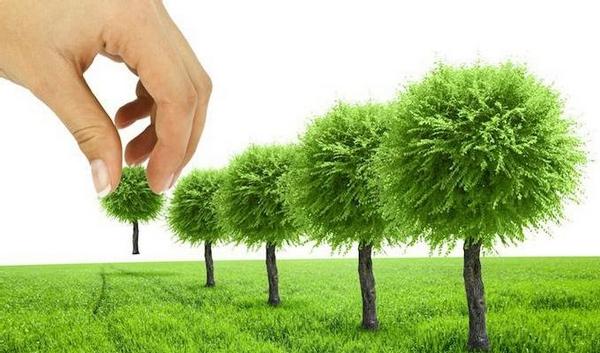 озеленення, саджанці, дерева