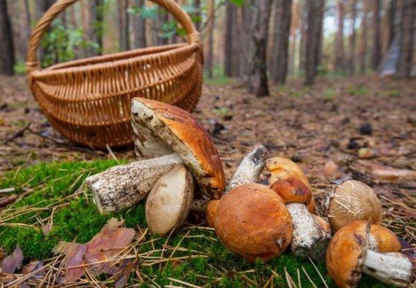 Чернігівщина, гриби, крадіжка
