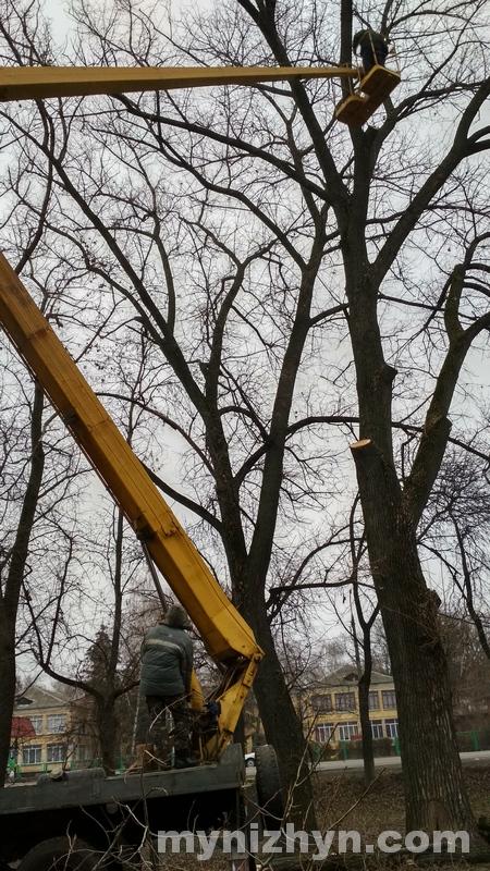 дерева, тополі, Шевченка, видалення