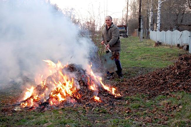 """Результат пошуку зображень за запитом """"спалювання листя"""""""
