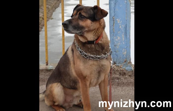 зник пес, зник собака, зник друг, Ніжин, Леонід Руденко