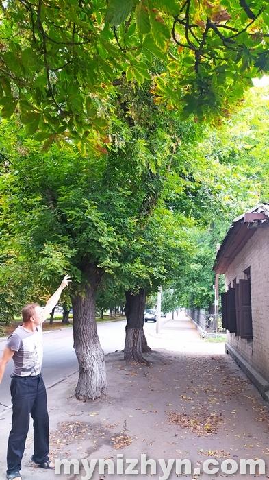 дерева, негода, дах, пошкодження, звернення, УЖКГ та Б