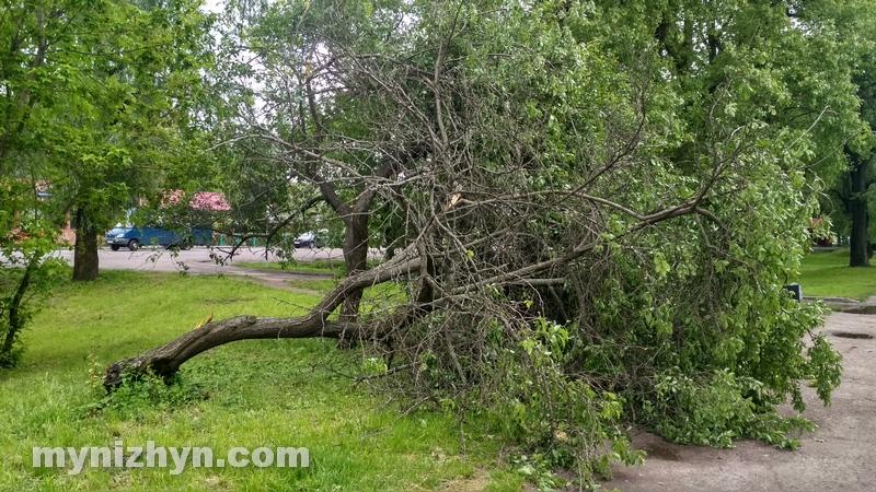 негода, дерева, буревій, наслідки