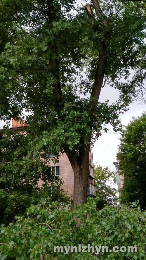 вітер, гілки, дерева