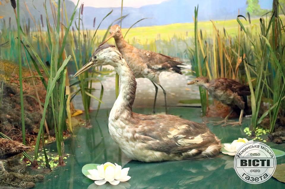 Музей, відділ Природи Приостер'я